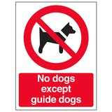 No Dogs Except Guide Dogs - Window Sticker
