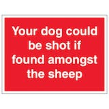 Your Dog Could Be Shot If Found Amongst The Sheep - Large Landscape
