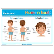 Know Your... Human Body Poster